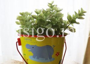 観葉植物up02