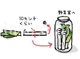 長ねぎイラスト1